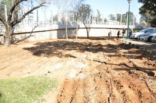 garden-before.jpg