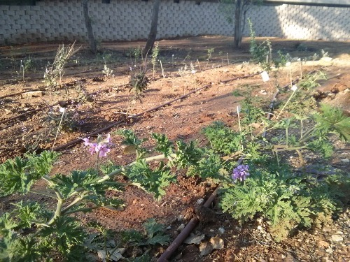 garden-march-02.jpg
