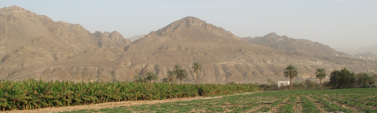 An arid study site, Jordan