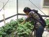 2005sulo-in-greenhouse